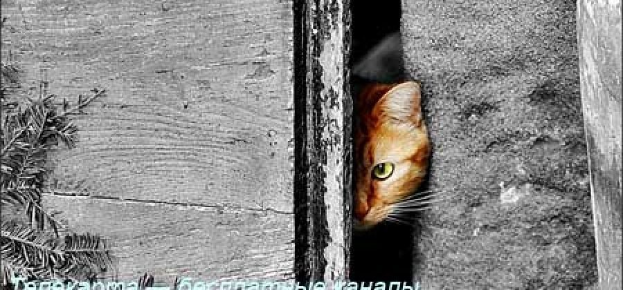 Телекарта — бесплатные каналы. Обзор от НскТарелка.ru